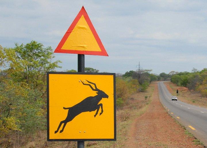 Gefahrenschild Botswana - Wildwechsel antilope