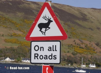 Gefahrenschild Isle Of Aran - Hirsche Auf Allen Straßen