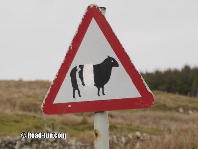 Gefahrenschild Isle Of Islay - Schafe (übermalt)