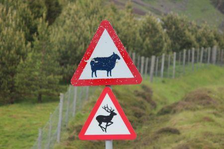 Gefahrenschild Schottland - Schafe & Hirsche