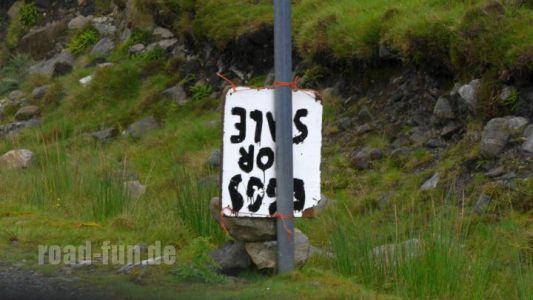 Hinweisschild outer Hebrides - Eierverkauf